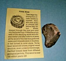 Vintage Piece of FOSSIL WOOD