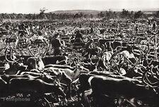 1934 Vintage 11x14 SWEDEN ~ Reindeer Halbwilder Herd Lapland Landscape Photo Art