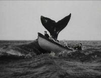 Vintage Whale Fishing Photo 940 Oddleys Strange & Bizarre