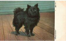 Vintage 1906 Postcard Black Pomeranian Dog Unposted
