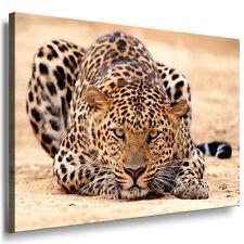Bild Leinwand Bilder mit Keilrahmen Leopard, Katzen N7698 Kunstdruck kein Poster
