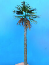 1/35 1/32 built Palm Tree for diorama (type 2)
