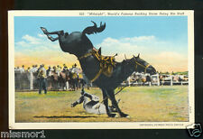 Midnight the bucking bronco rodeo horse Vintage postcard 1930s Colorado