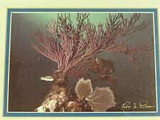 FANTASTIC SIGNED RAY DOAN UNDERWATER CORAL REEF ART
