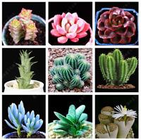 100 PCS Seeds Rare Mini Cactus Bonsai Mix Succulent Ornamental Plants Lithops N