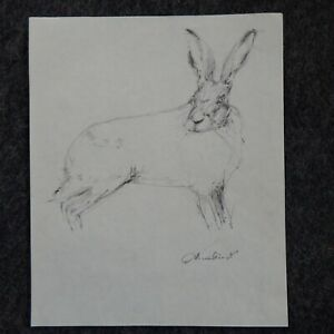 Original signed light pencil drawing sketch of a hare or rabbit on paper