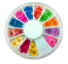 New 12 Color Real Dry Dried Flower 3D Gel Nail Art UV Gel Acrylic Tips Salon