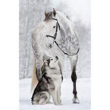 DIY 5D Full Drill Diamond Painting Horse Wolf Cross Crafts Stitch Home Decor Art