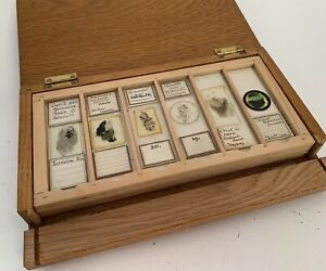 24 Cased Antique Petrology Microscope Slides from Cornwall