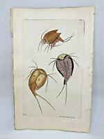 Cancroid Monoculus - 1783 RARE SHAW & NODDER Hand Colored Copper Engraving