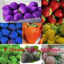 1600pcs 8 Colours Delicious Strawberry Seeds Plant Everbearing Giant Fruit Sweet
