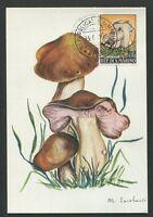 SAN MARINO MK 1967 FAUNA PILZE MUSHROOMS CARTE MAXIMUM CARD MC CM 60696