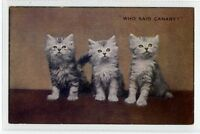 (Sc295-100)  Who Said Canary, Cats, unused ,Vg
