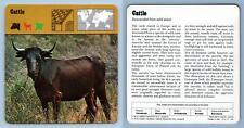 Cattle - Mammals - 1970's Rencontre Safari Wildlife Card