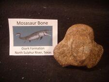 Dinosaur Bone Mosasaur Bone Ozan Formation Texas, US