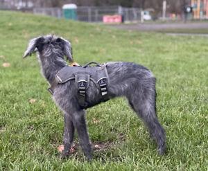 Ruffwear Web Master Dog Harness Twilight Grey XXS
