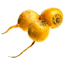 500 Seeds of Turnip Round Golden (Yellow) / Ball ofGold / Flavor Sweet