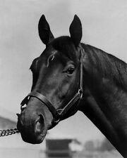 1948 Triple Crown Horse CITATION Glossy 8x10 Photo Glossy Thoroughbred Print