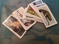 HORNIMANS TEA CARDS PETS X 24 CARDS