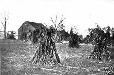 Book of Halloween Haystacks in the Autumn Farm Field 7x5 Inch Reprint Photograph