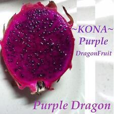 ~PURPLE DRAGON FRUIT~ Red Skin Purple Plup Pitaya Hylocereus Cactus 100 Seeds