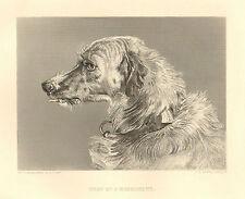 Sir Edwin. Landseer, Dog, Head Of A Deerhound, Vintage, 1878 Antique Art Print,