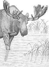 "CAN. Wildlife Moose Ltd. Print/Pencil drawing ""9X12"""