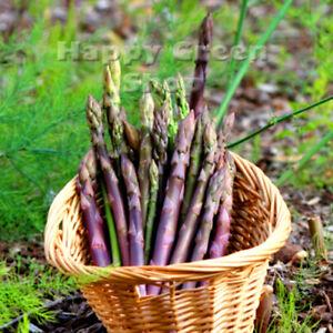 VEGETABLE - ASPARAGUS D'ARGENTEUIL - 110 seeds - Perennial vegetable