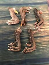 5 muskrat feet cured claws Witchcraft Voodoo Spell Skull taxidermy mount repair
