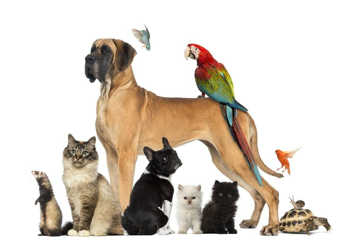Your Loved Pet