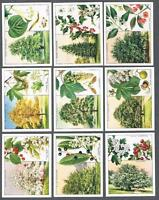 1937 Wills's Cigarettes Trees Large Tobacco Cards Complete Set of 40