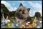 Summer Floor Mat - Brindle Cairn Terrier 39266