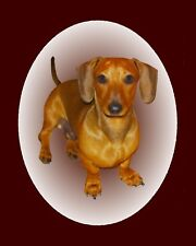 Metal Magnet Dachshund Looking At Camera Tan Disc Brown Border Dog Dogs Magnet
