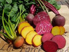 Beetroot Heirloom Mix (150 seeds) -Organic Heirloom from Life-Force Seeds