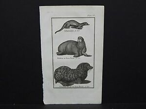 Buffon's Natural History, 1792 Animals, #31 Ichneumon, Walrus, Ursine Seal