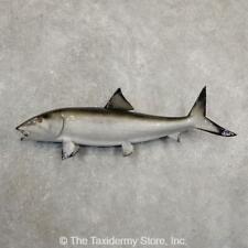 #20917 E | Bonefish Taxidermy Fish Mount For Sale