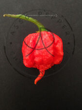 PEPERONCINO CAROLINA REAPER 10 SEMI PURI ISOLATI DA GUINNESS WORLD RECORD!