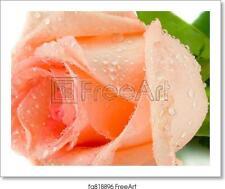 Pink Rosebud Art Print / Canvas Print. Poster, Wall Art, Home Decor - D