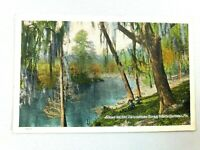 Vintage Postcard Scene on the Suwannee River White Springs FL Florida