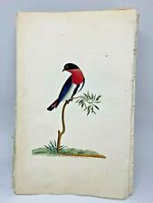 Swallow Warbler - 1783 RARE SHAW & NODDER Hand Colored Copper Engraving