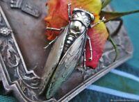 Broche ancienne Grande cigale argentée Art Nouveau France Antique brooch Grand c