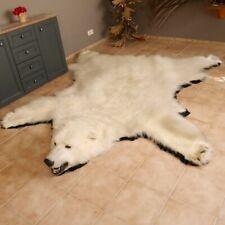 Eisbär Fell Bär Vorleger mit Kopfpräparation taxidermy Genehmigung zum Verkauf