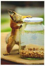 Klappkarte: Eichhörnchen inspiziert Glas mit Erdnüssen - de luxe - Red Squirrel