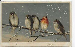 GENUINE VINTAGE CHRISTMAS POSTCARD,BIRDS ON SNOWY BRANCH(IDEAL TO FRAME)1904
