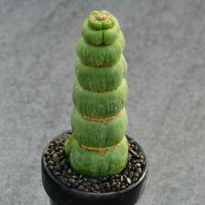 Eulychnia castanea fa. varispiralis cactus Succulent Garden plants