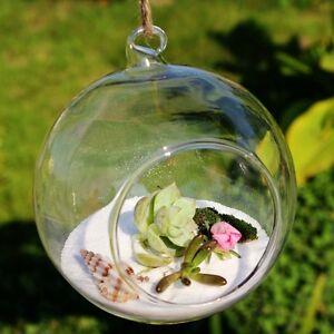 10 cm Hanging Glass Terrarium Globe / Terrarium Container / Glass Globe