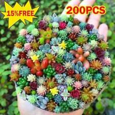 200X Mini Succulent Cactus Seed Rare Perennial Herb Plants Home Garden Bonsai