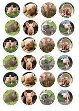 24 PIG PIGS CUPCAKE TOPPER WAFER RICE EDIBLE FAIRY CAKE BUN TOPPERS