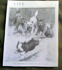 Boston Terrier Dog Puppy Afraid Of 3 Kittens 1920 Life Magazine Reprint
