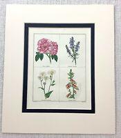 Hand Farbig Gravierung Botanische Blumen Rose Orientalisch Ysop Antik 1824